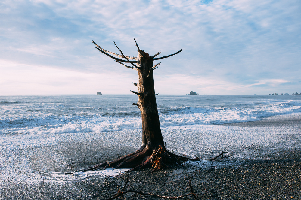 I came out here to visit La Push's rugged coastline.  I heard stories of the insane trees on the water's edge, but didn't expect to see them actually below the waves at high tide!