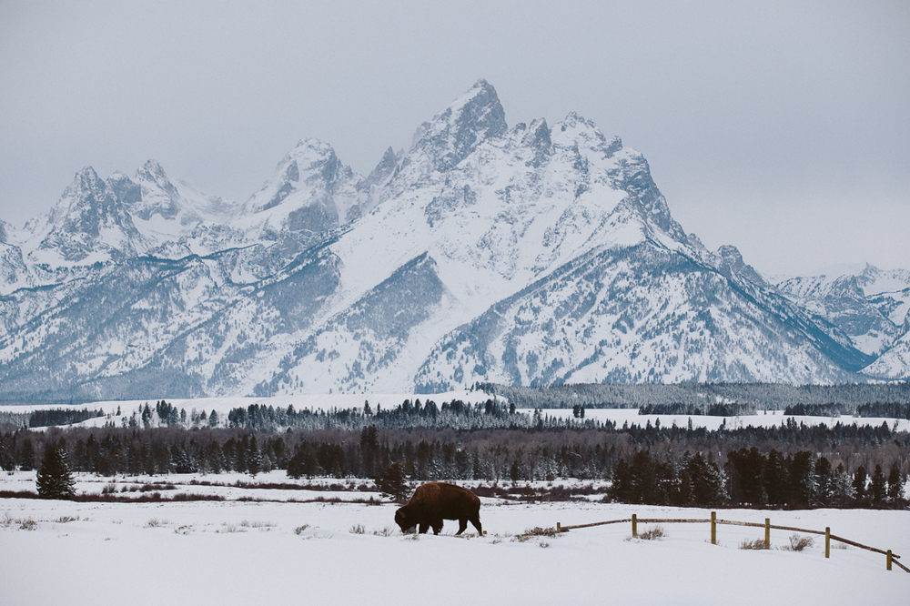 Them mountains of Jackson, the Grand Tetons.  Complete postcard here with a buffalo wandered off from Yellowstone.
