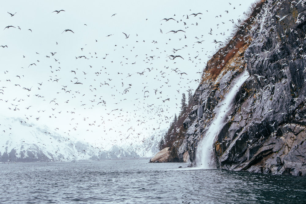 A jillion birds, a waterfall into the ocean, some snowy mountains. Maybe the coolest photo I've ever made.