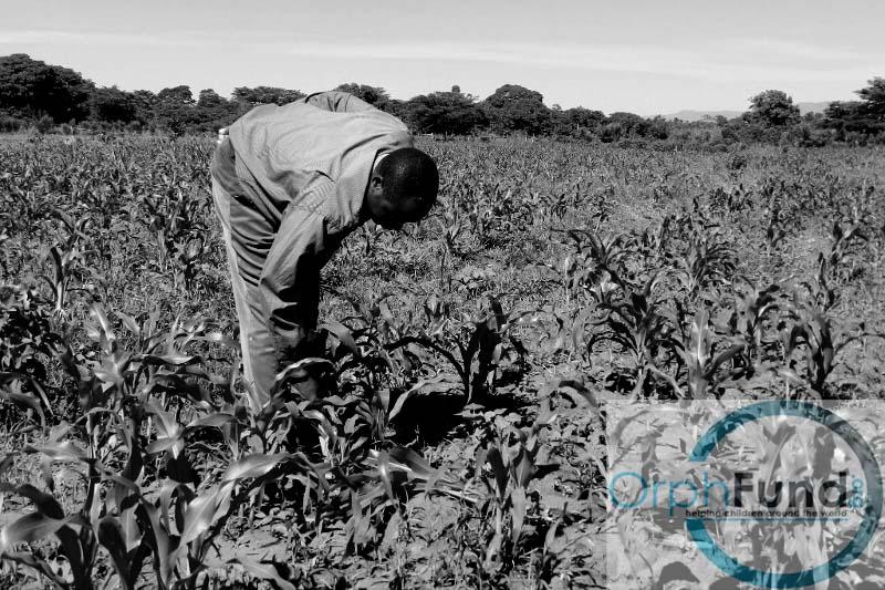 013 - farm uganda copy.jpg