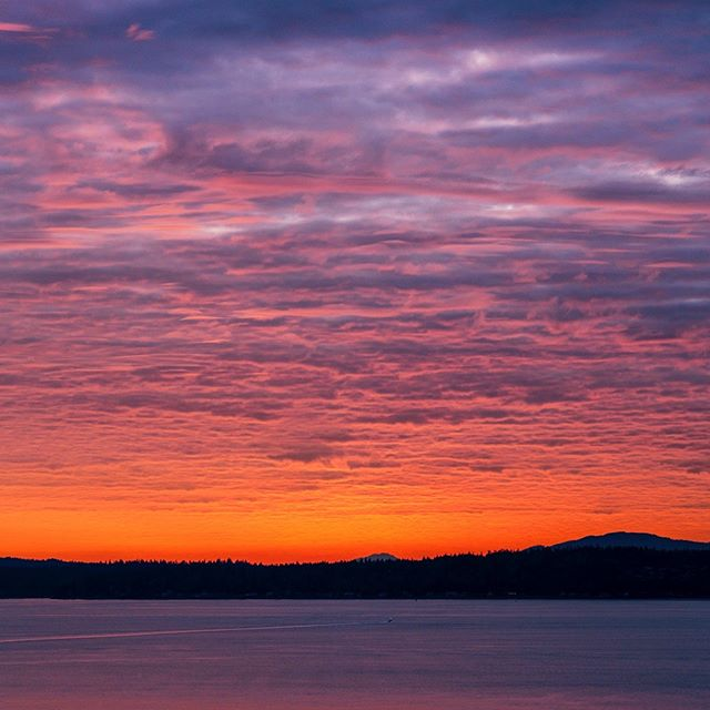 Some more flavor from last night . . . . . . . . #seattle #seattlelife #seattlephotographer #sunset_sunrise_beautiful #westernnature #seattleart #pnw #sunset #nikonusa #washingtonexplored #pnwescapes #landscapephotography #vscofilters #landscape_lovers #super_photosunsets #landscapecaptures #landscapephoto #visitseattle #clouds #sky_sea_sunset #livewashington #viewpnw #fs_sunset #sunsetlovers