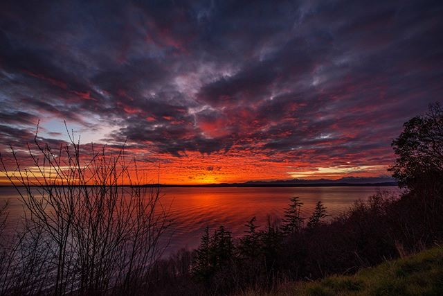 'No one belongs here more than you do.' ~ Brené Brown . . . . . . . . #seattle #seattlelife #seattlephotographer #olympicmountains #sunset_sunrise_beautiful #westernnature #seattleart #pnw #sunset #nikonusa #washingtonexplored #brenebrown #pnwescapes #landscapephotography #landscape_lovers #landscape_captures #landscapecaptures #landscapephoto #visitseattle #clouds #sky_sea_sunset #livewashington #viewpnw #fs_sunset #sunsetlovers