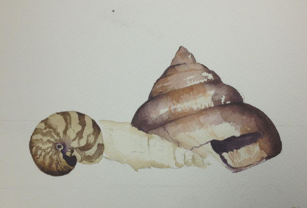 Shells, 2013