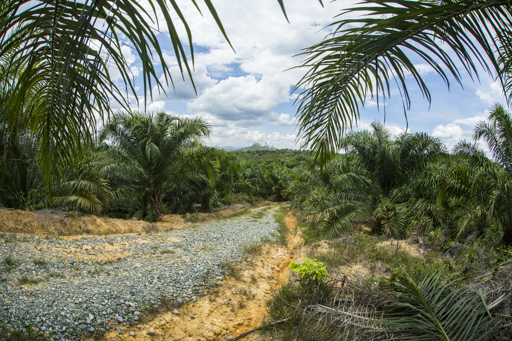 Palm oil increases as the Indonesian government invests further in the production of it. Ecosystems are destroyed by the monoculture.