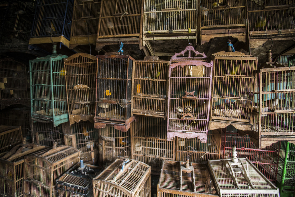 Indonesia's animal markets are stacked from floor to ceiling with cages housing all manner of creatures. The vast majority of which have been taken from the wild.