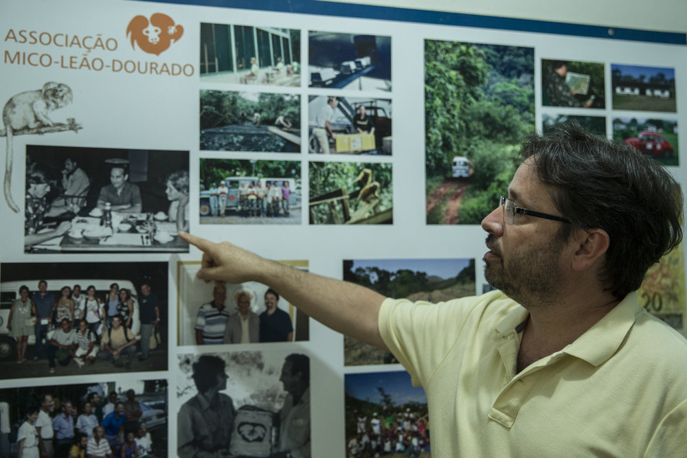 Dr Luis Paulo Ferraz, head of the Golden Lion Tamarin Association shows the timeline of the GLT's recovery.