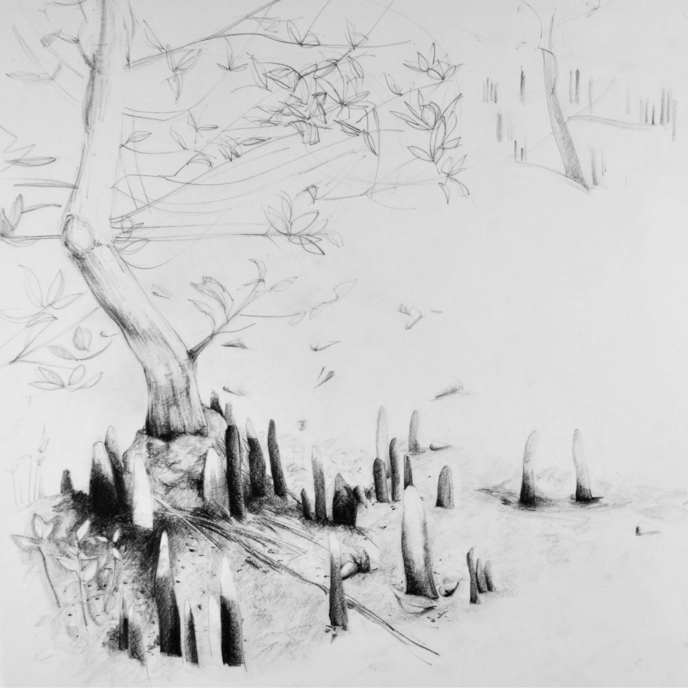 Black Mangrove Tree, Pencil Drawing, Vicky Long