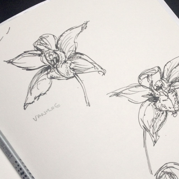 I begin by sketching orchids from life.
