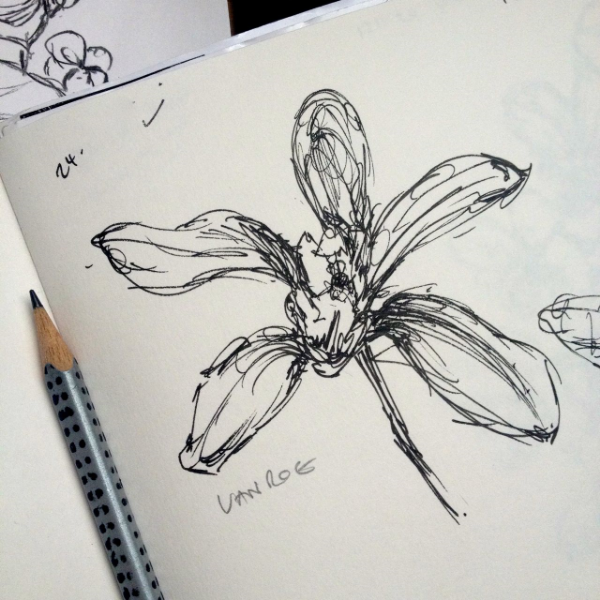 My sketchbook quickly fills with drawings of different orchids, all done in ink. I try to sketch as many different flowers as possible, hoping to find the perfect shape.