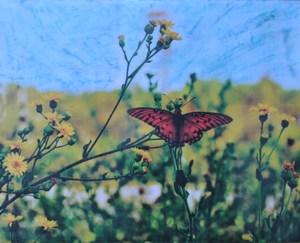 Jennie Butterfly.jpg