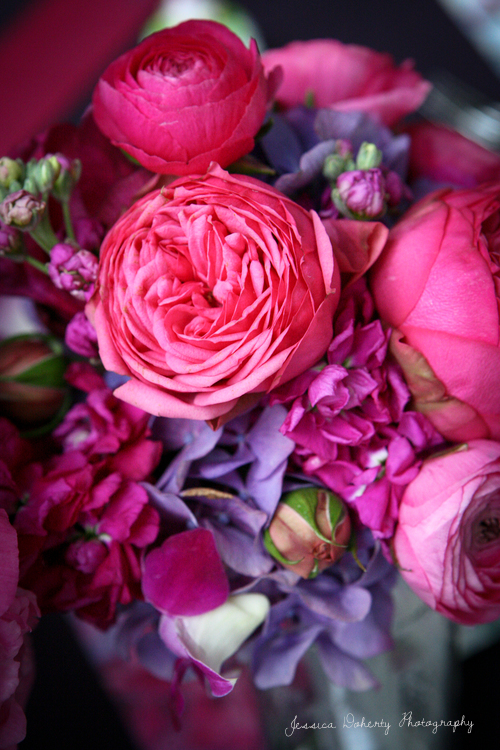 hot pink garden roses with ranunculus stock hydrangea