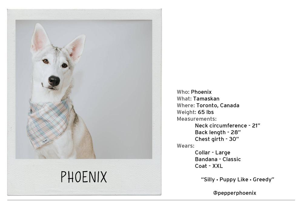 Phoenix-2 copy.jpg