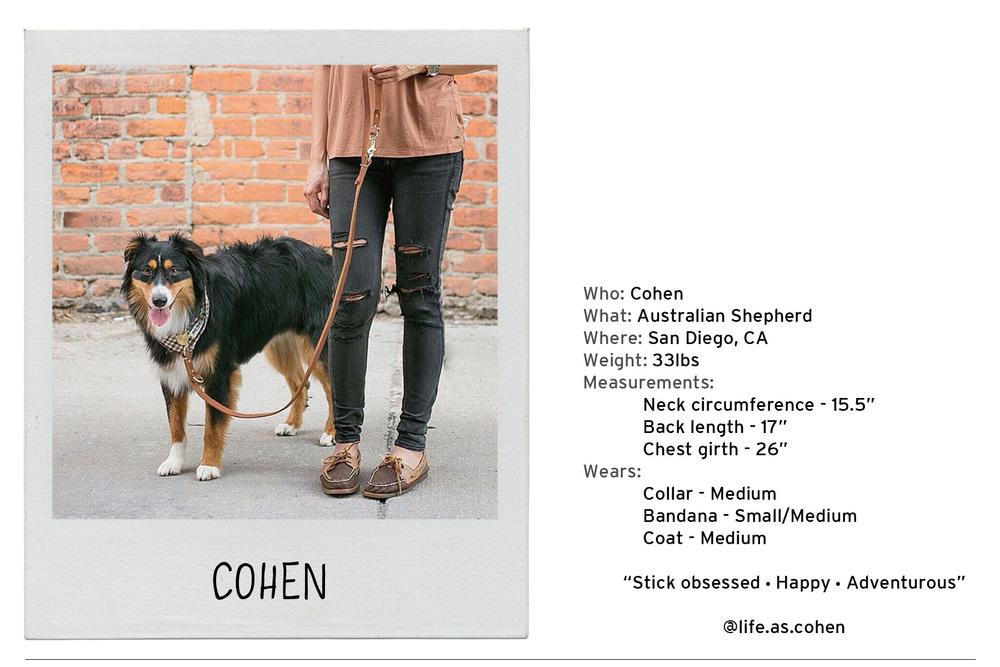 Cohen-2 copy.jpg
