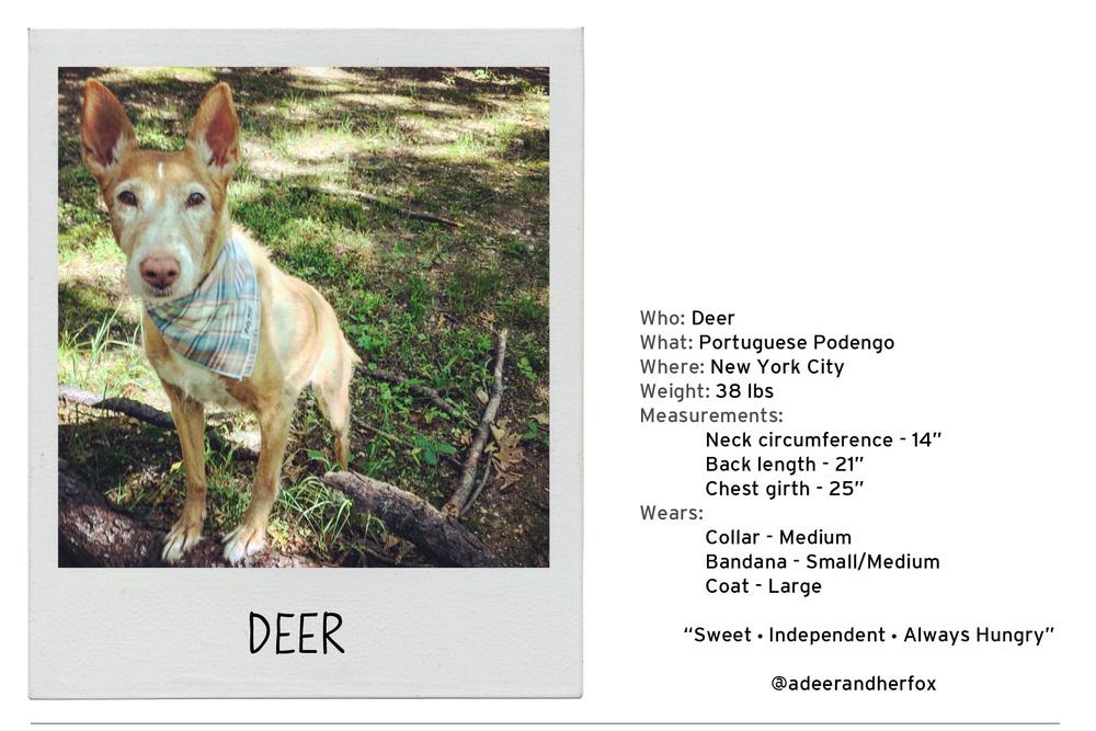 Deer-2 copy.jpg