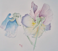Botanical Art with Claudia Stevens