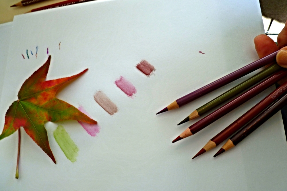 Drawing Autumn Leaves in Fall Color - with Nina Antze
