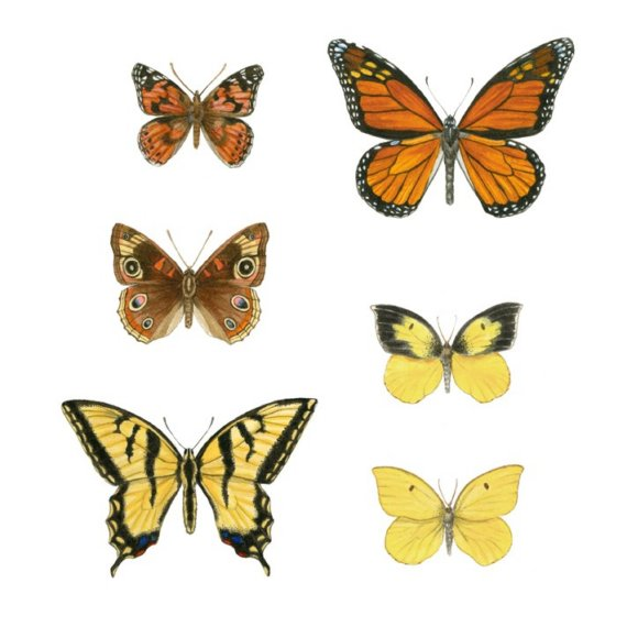 California butterflies.jpg