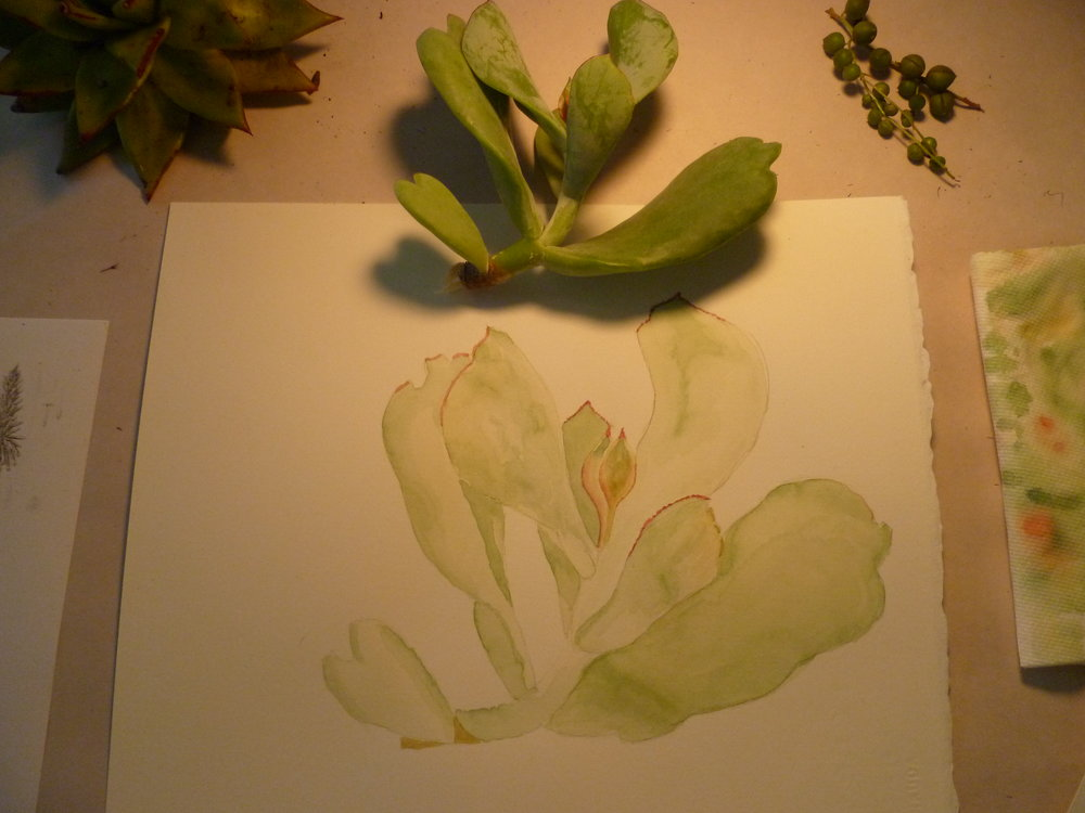 Drawing Succulents with Erin Hunter
