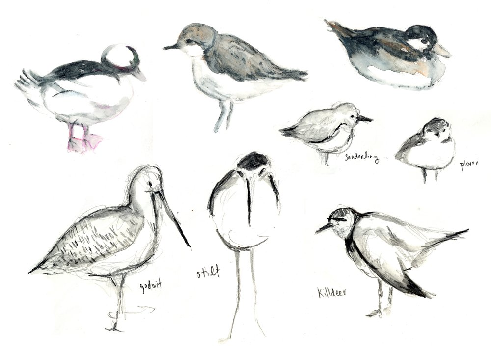 bird sketching 1.jpg