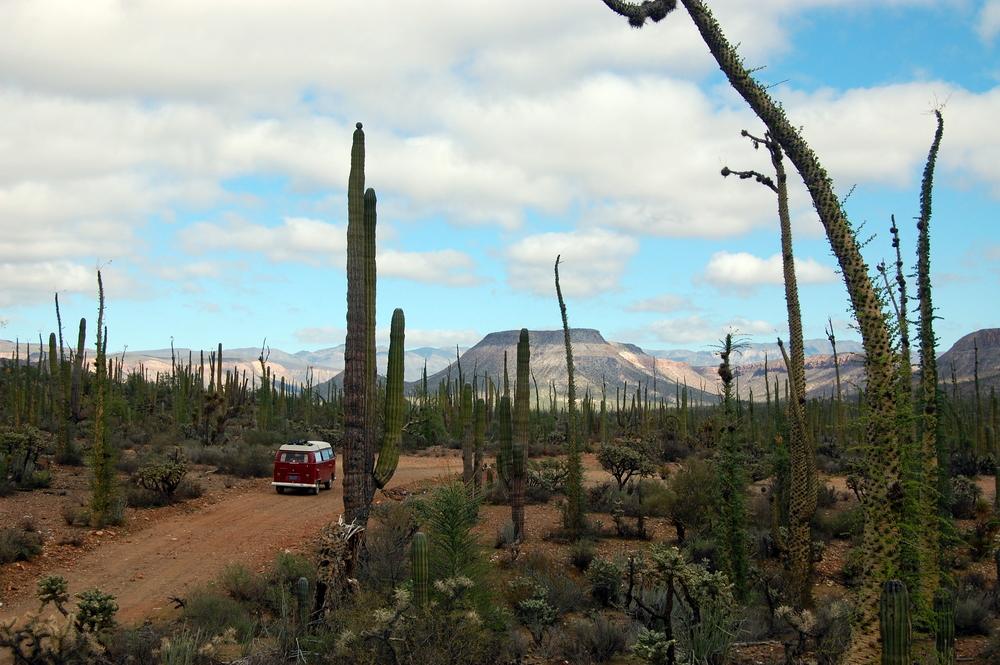 The desert landscape of Baja, Mexico