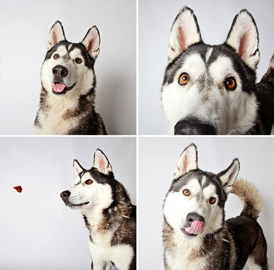 chico-husky-dog-rental-booth-photo