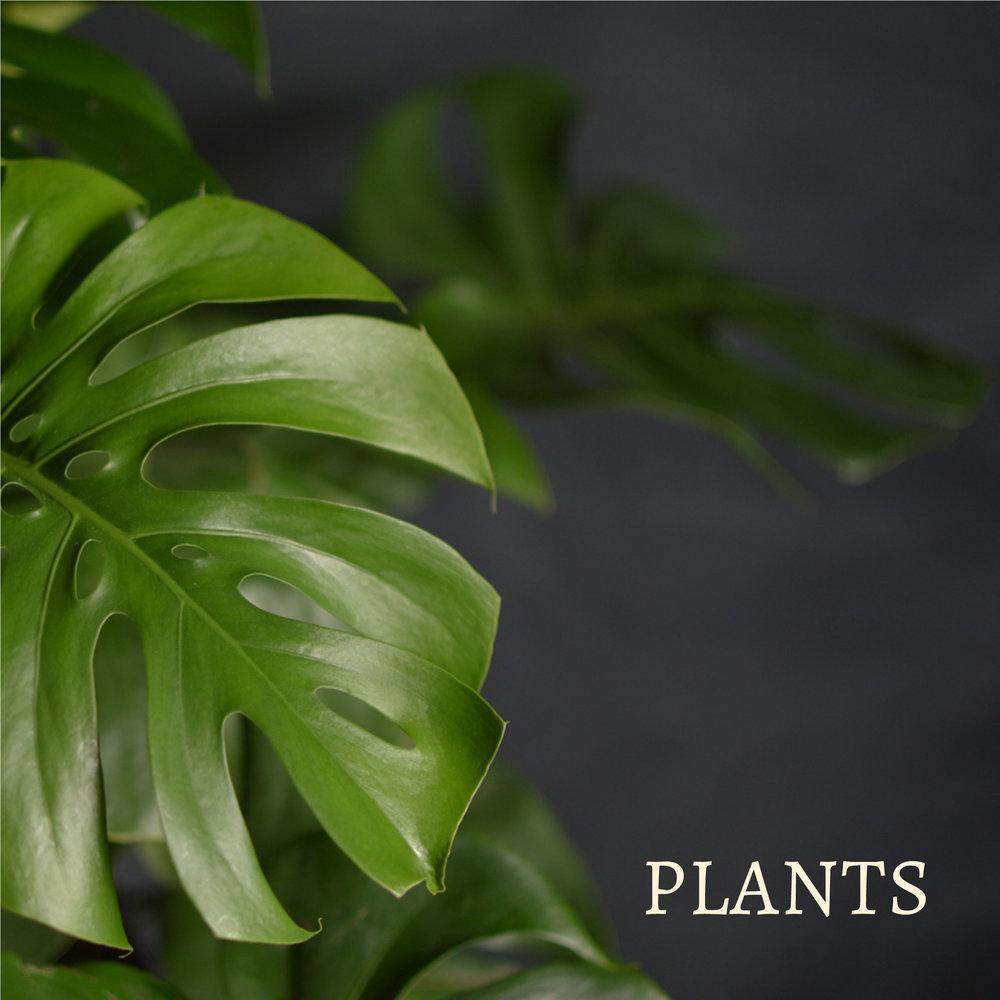 Fleurplants3.jpg