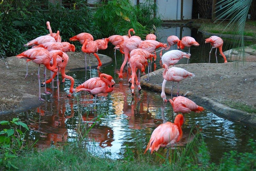 SC Zoo 2.jpg