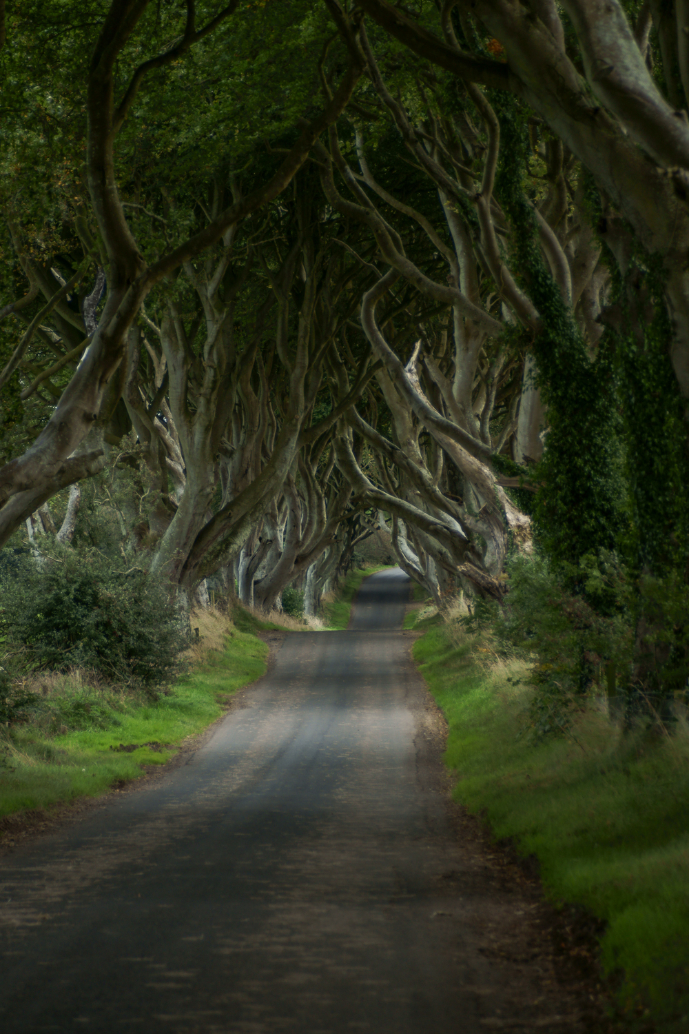 Dark hedges - Summer-Edit-Edit.jpg