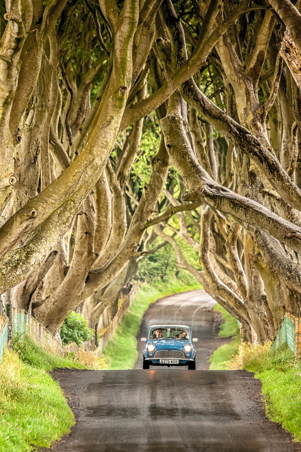 Dark hedges with mini.jpg