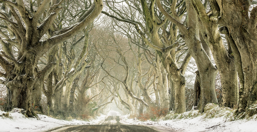 The Mythical Dark Hedges-2.jpg