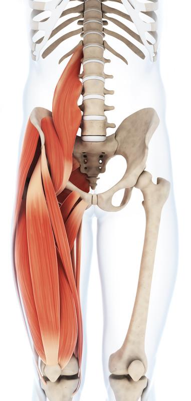 Spieren voorzijde van het bovenbeen (Quadriceps)