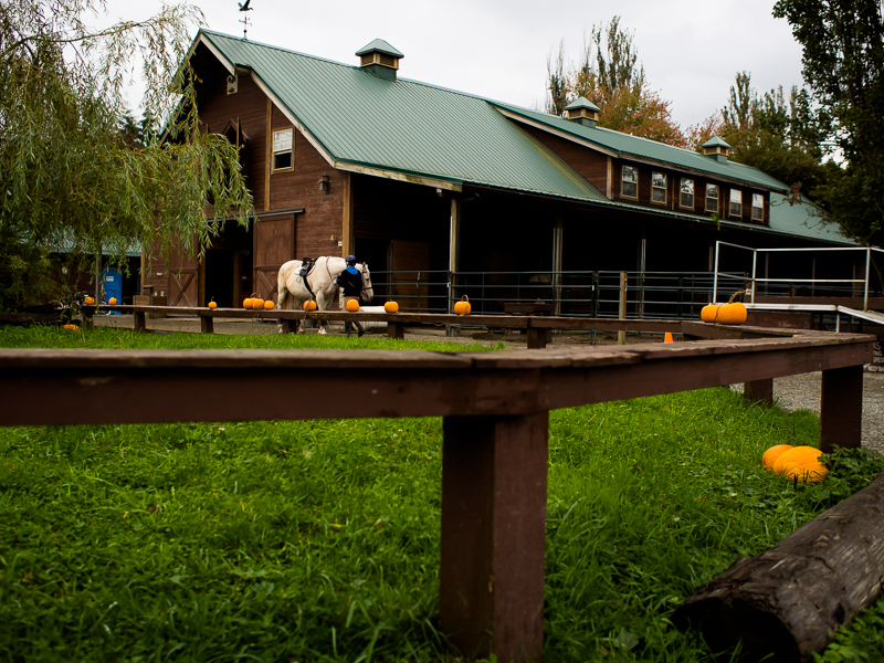 A rider is getting her horse ready at the Southlands Heritage Farm, Vancouver, BC, Canada on September 29, 2013. Photo: Art Zaratsyan