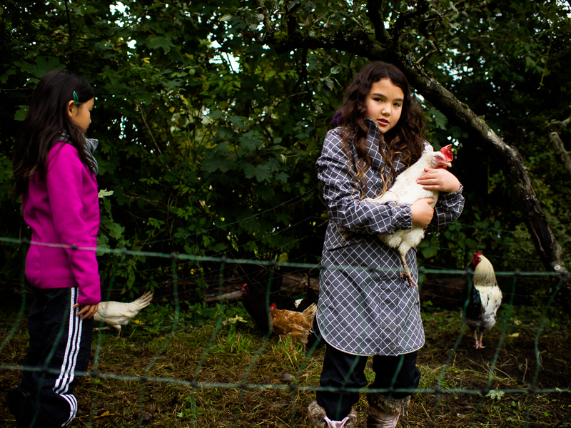 A girl holds a chicken at Southlands Heritage Farm, Vancouver, BC, Canada on September 29, 2013. Photo: Art Zaratsyan