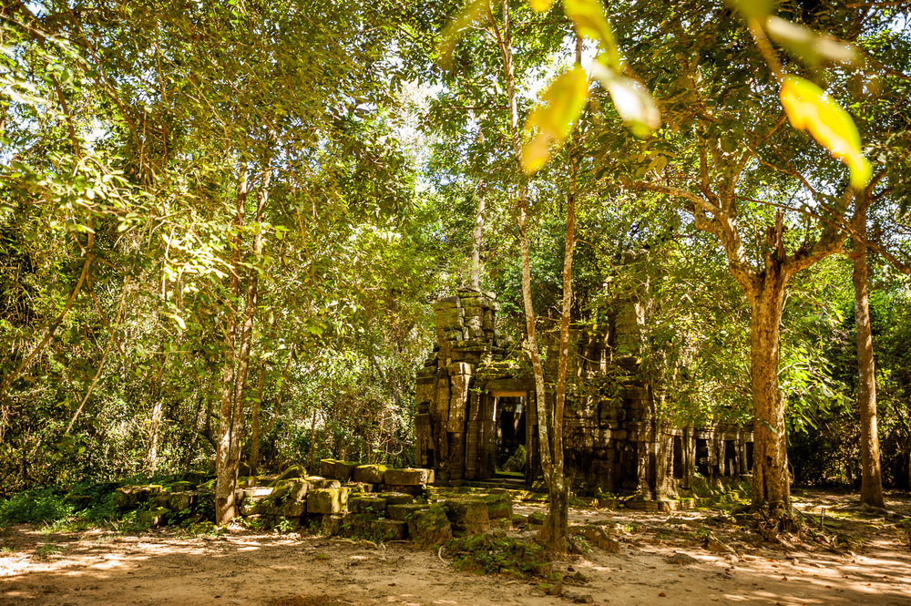 An ancient temple in swallowed by jungle in the city of Angkor. Siem Reap, Cambodia. November 24, 2013.