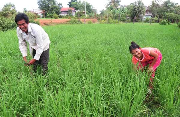 "In 2014, Kuoy Saren, and his wife, Chem Saroeurn received training, irrigation, seeds, and fertilizer to successfully begin growing dry season rice. They live in Bakan village, and have three children, as well as their parents, living with them. Before, Kuoy & Chem were only able to harvest about 2000-2500 kg once a year, which was only enough to feed their family for four months. For the remainder of the year, all of the family members were forced to earn income by harvesting rice for others. Kuoy & Chem also had to borrow money just to cover the cost of expensive chemical fertilizers. Now, after just one crop of dry season rice, they harvested 3500-4000 kg of rice, which means that the family has more than enough to eat, as well as extra to sell! This is in addition to the two additional crops they will now harvest each year. Kuoy, Chem, and their children no longer have to work harvesting rice for others, and the children are now able to attend school. Kuoy dreamt, ""to have enough money for my children to study at city and have a good work to do in their life"" and now, this dream is possible. Photo: HOPE International Development Agency"