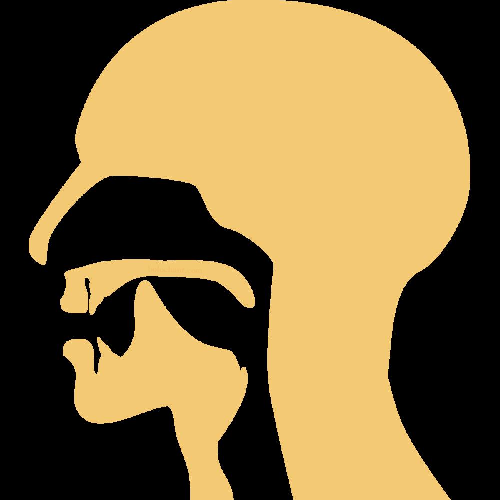 Retroflex Mouth Position