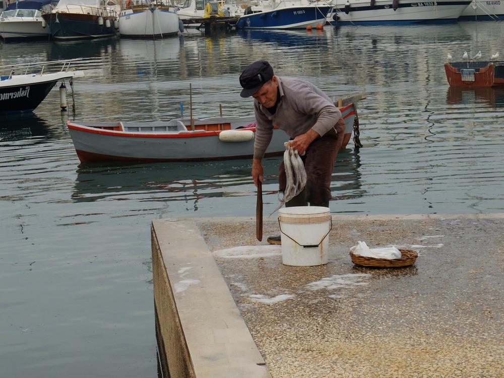 washing squid on the dock, Bari, Italy