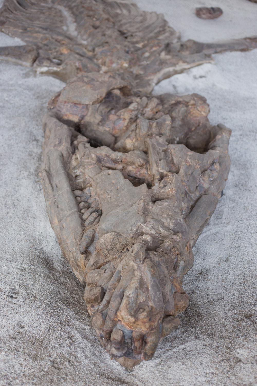 Largest intact dinosaur fossil, Villa De Leyva