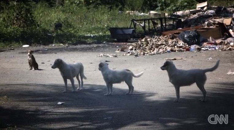 Saving pups from 'Dead Dog Beach'