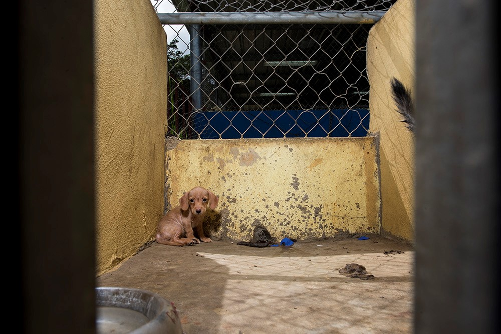 I couldn't forget the eyes of this little puppy, making herself as small as possible in the corner. Now named Bugsy, she's safe in our care.