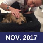 Newsletter Thumbnail Nov.png