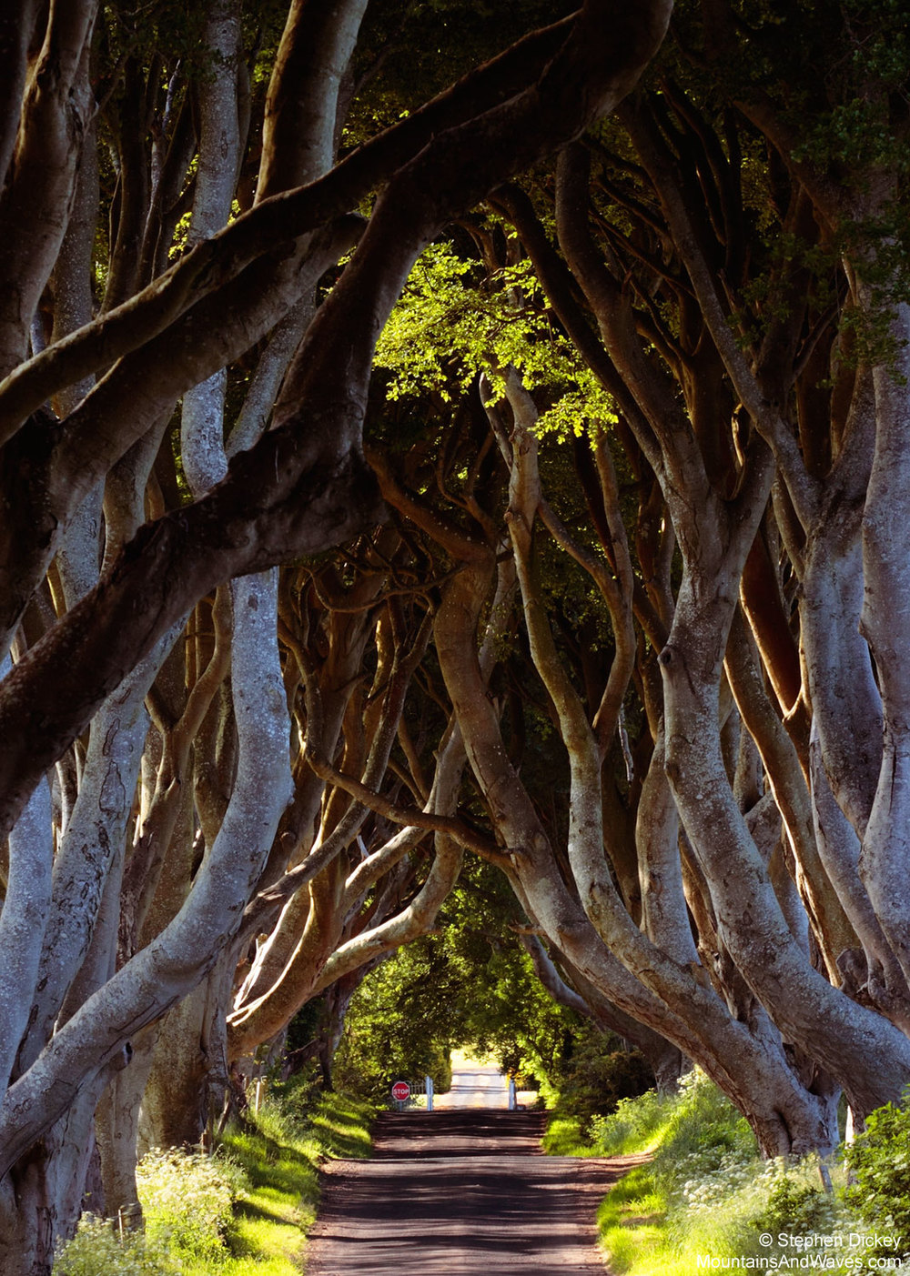 Dark Hedges 4 Northern Ireland Landscape Photography.jpg