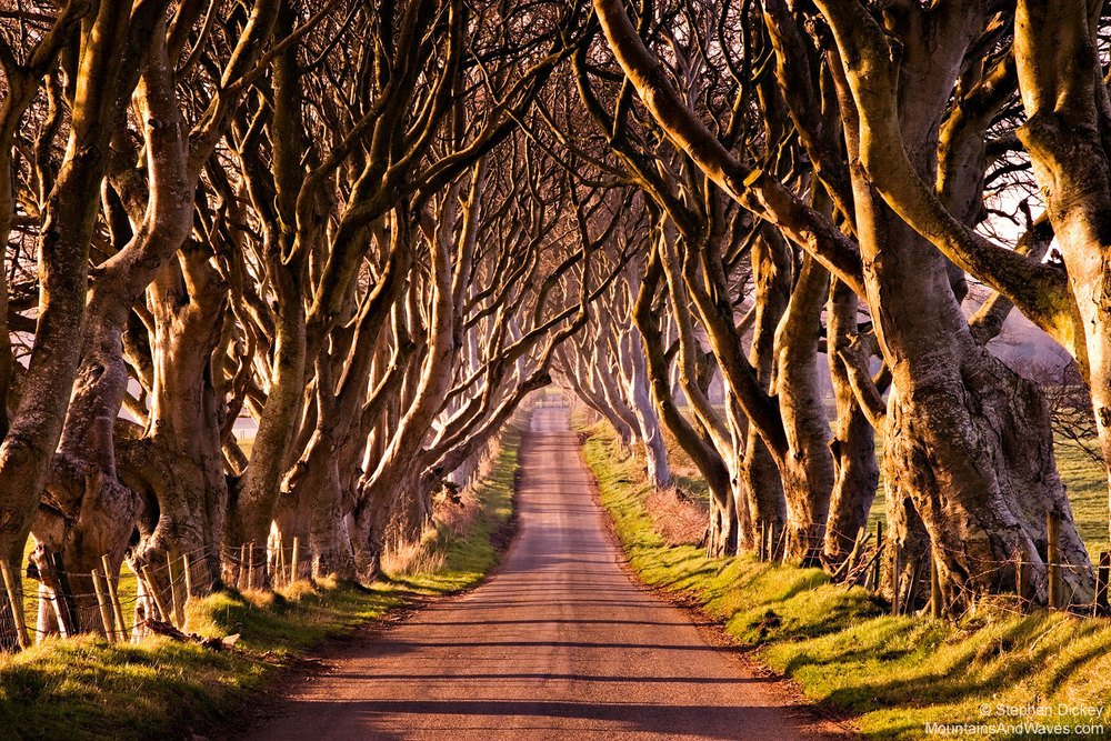 Dark-hedges-3.jpg