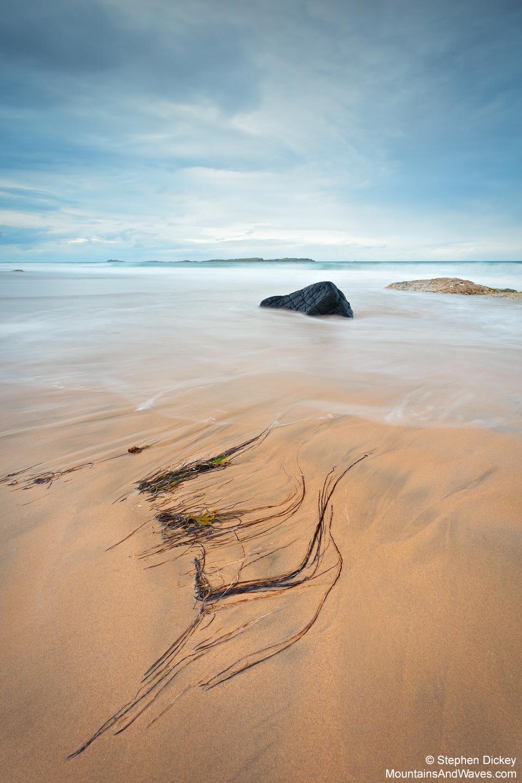 Whiterocks Seaweed, County Antrim, Northern Ireland