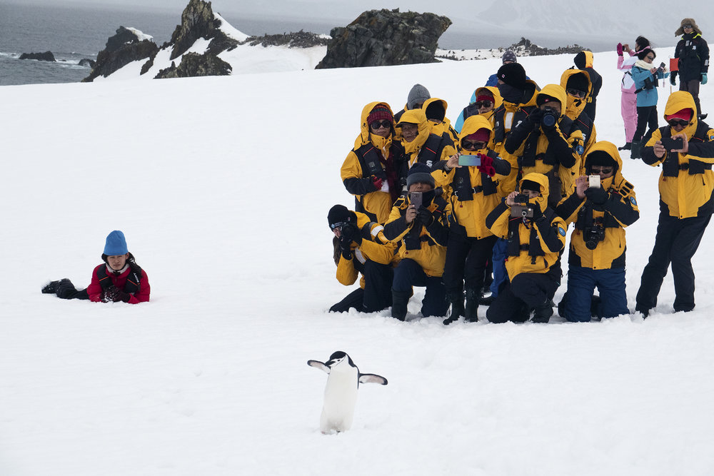 Lil' Googs ain't getting lumped in with the others    Chinstrap penguin sez 'whaddup'