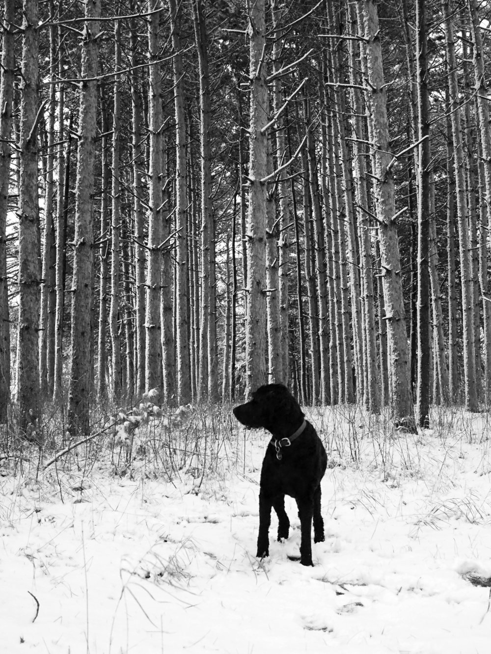 Dog in the woods. Shoreview, MN.