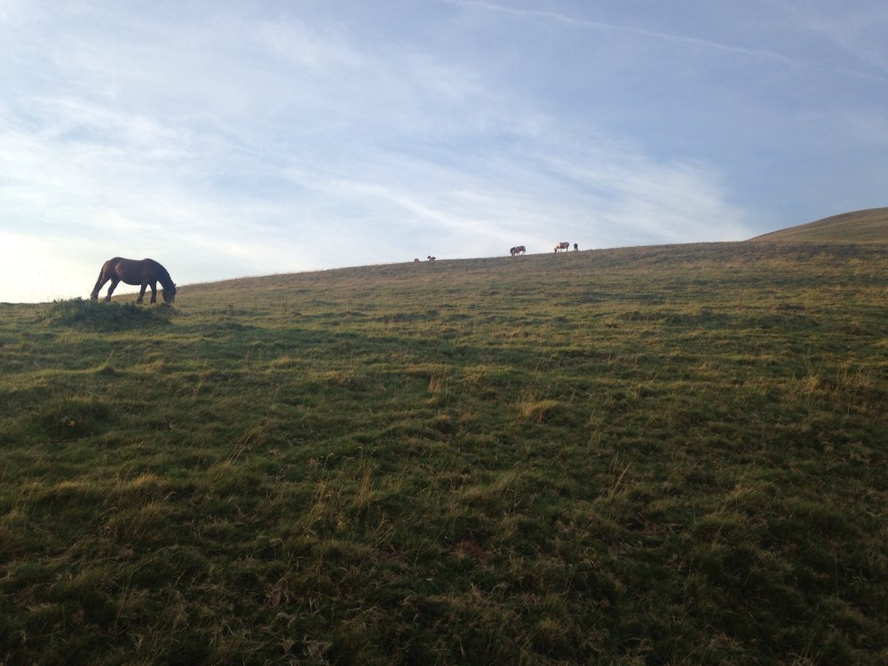 Teeny tiny horses