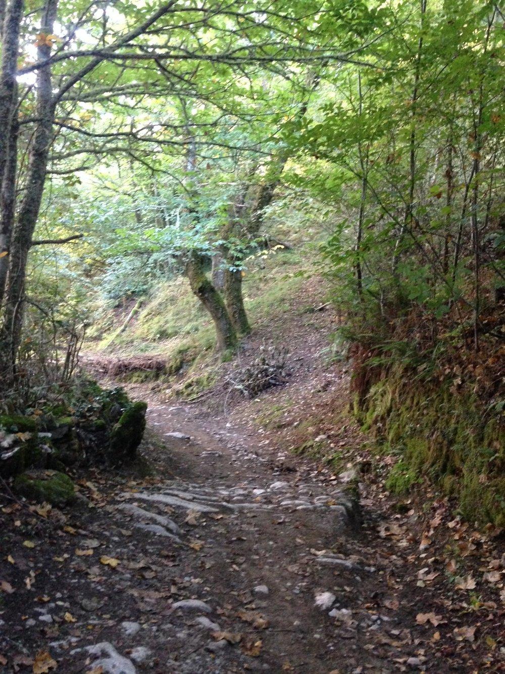 A beautiful but long, steep walk up to O'Cebreiro.