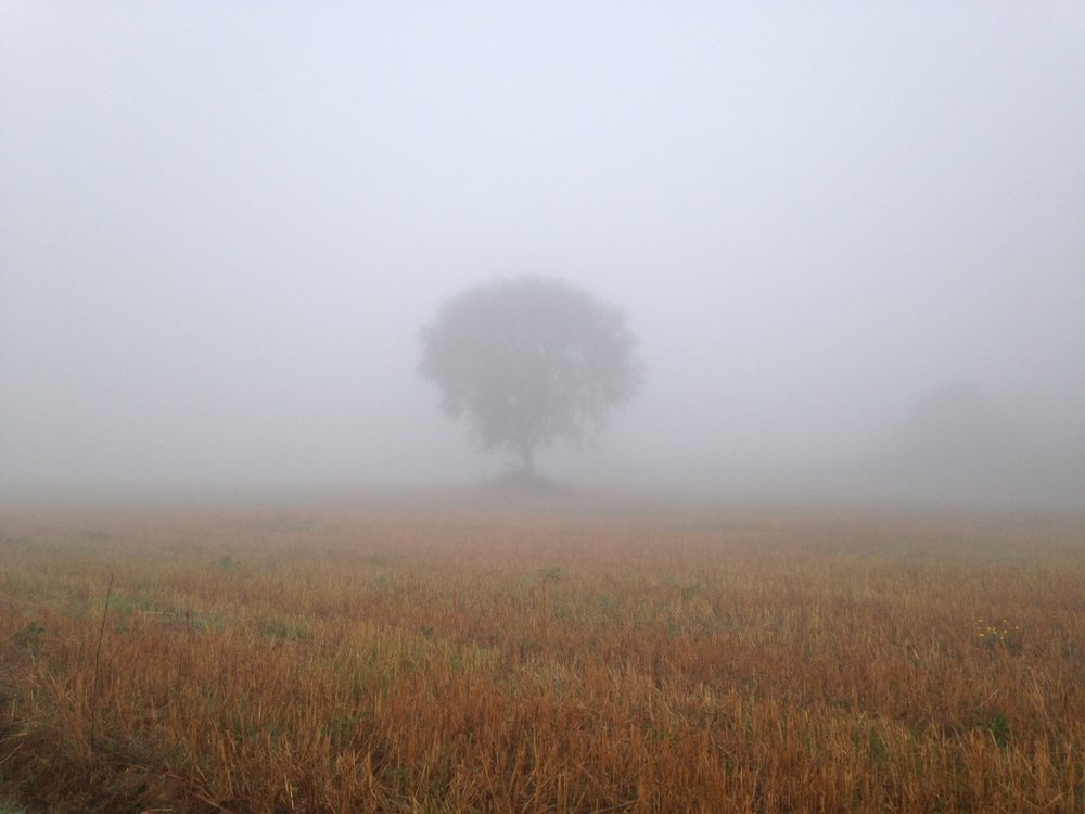 a mysterious misty morning