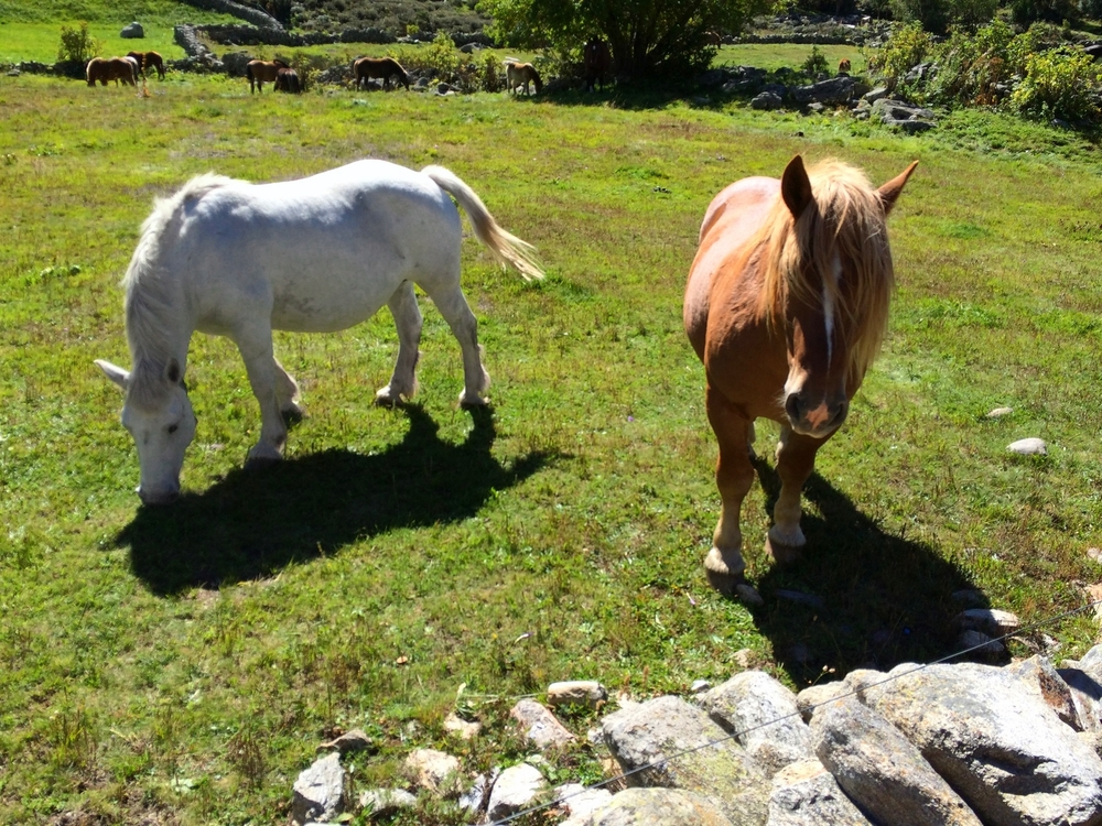 There are also these adorable horses seemingly roaming free.